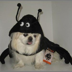 BeGood Spidey Paws Pet Costume – Dog not Included